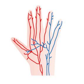 スコルジンの末梢血管拡張作用