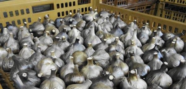 熟成・発酵されて作られる黒にんにく